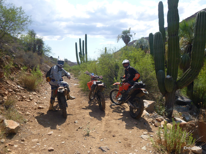MoJavi Saddlebag, Diablo Tank Bag, Zigzag Handlebar Bag in Baja